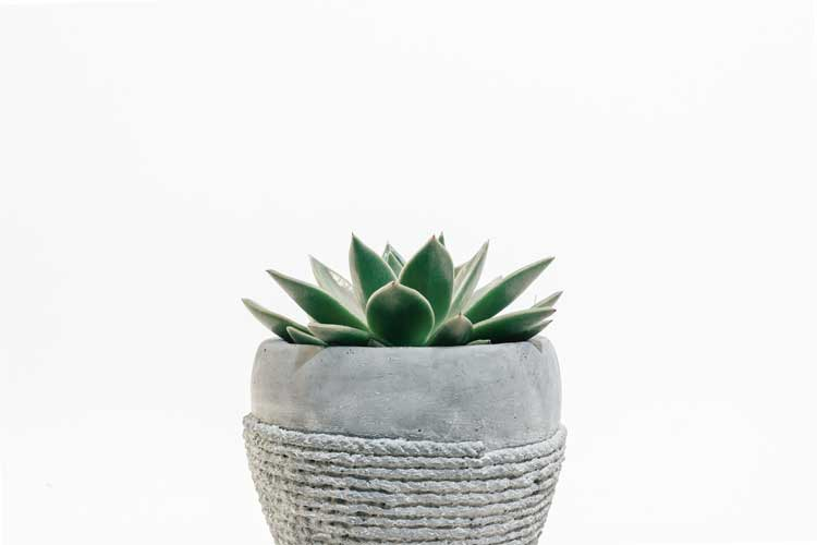 plant in a gray pot