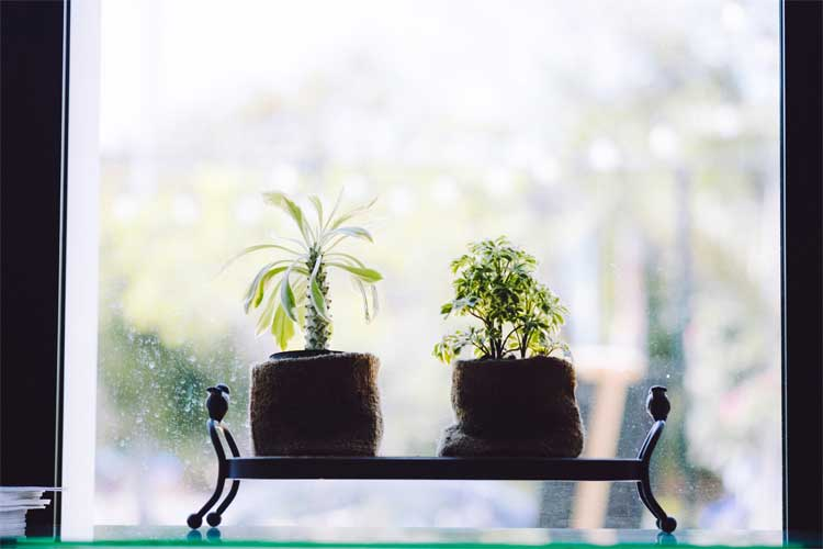 two plants on a table